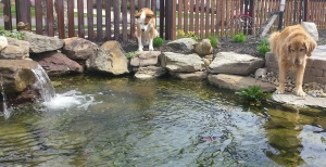 dogs on fish patrol